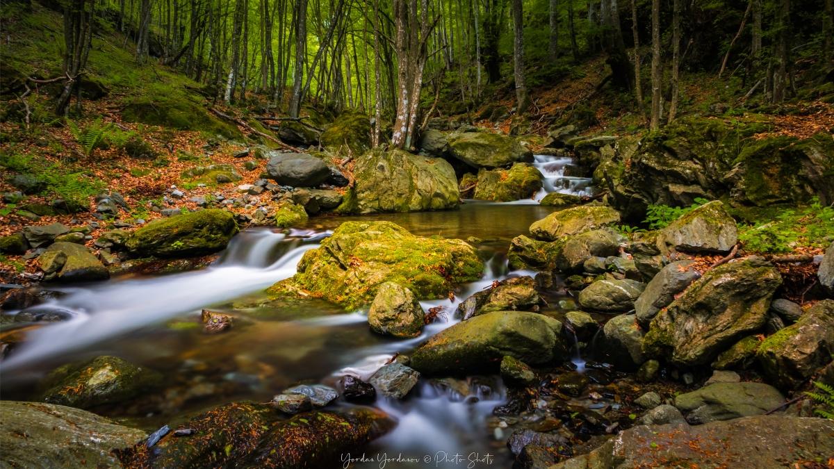 Планиски поток около Берковица