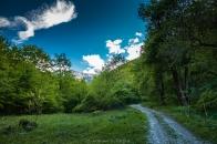 Сред горските пътеки
