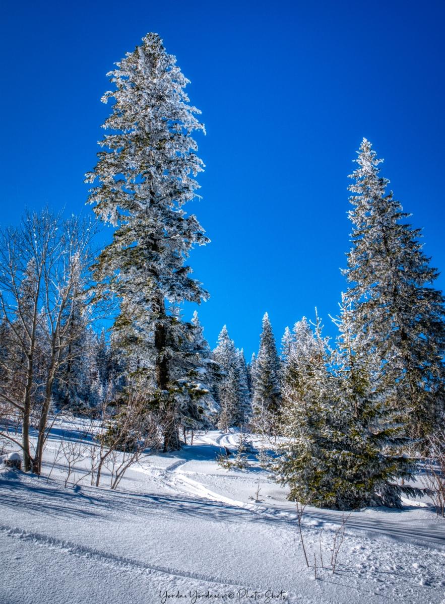 Зима над Берковица