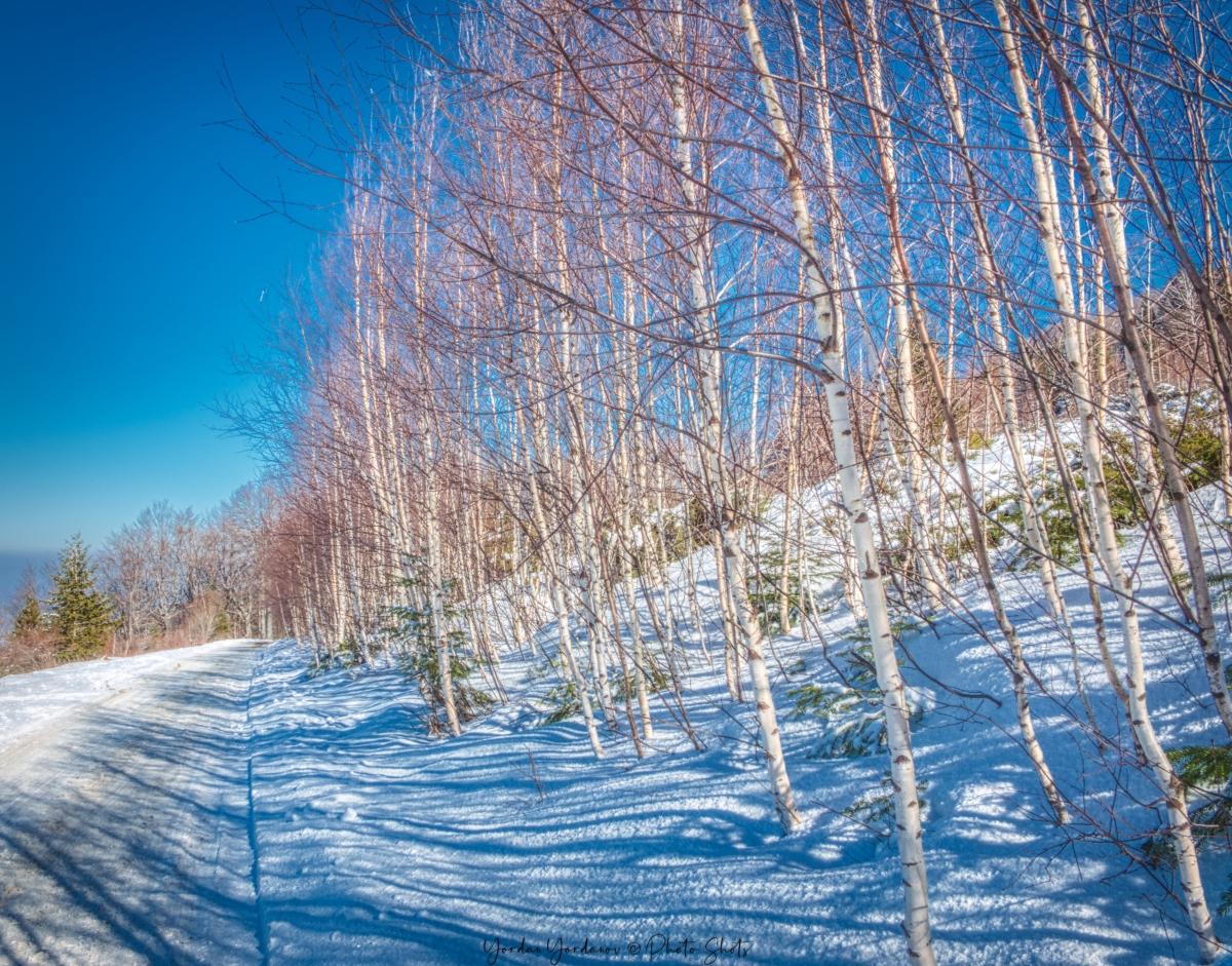 Пътят към връх Ком
